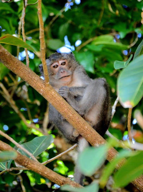 Black and Gray Monkey on Brown Tree Branch
