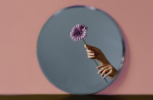 Kostnadsfri bild av blomma, håller, händer, inomhus
