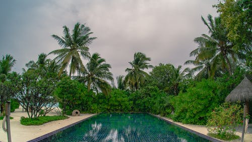 Green Palm Trees Near Swimming Pool