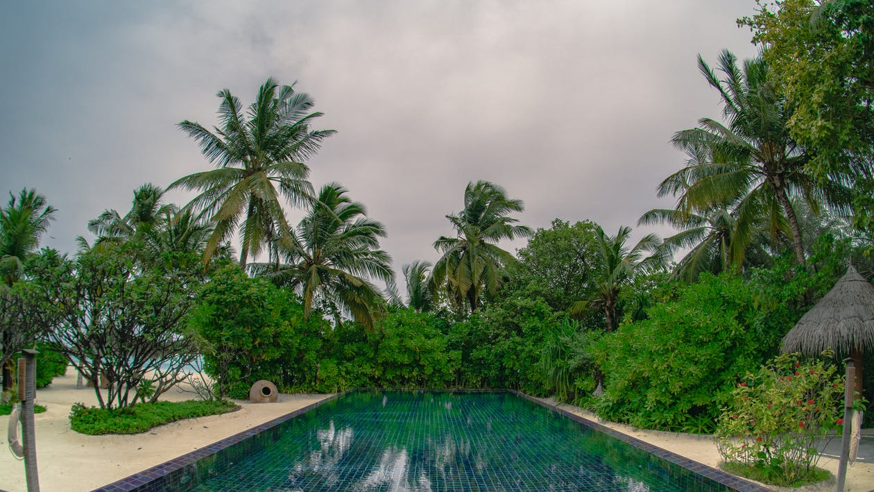 Green Palm Trees Near Swimming Pool