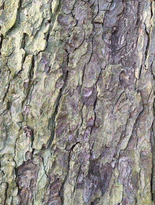 Gratis lagerfoto af baumrinde, structure, træ