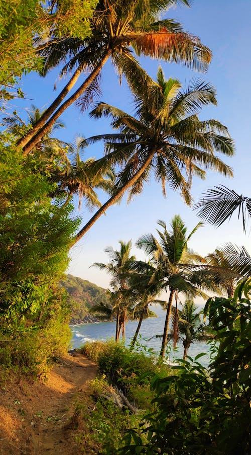 Green Coconut Trees Near Body of Water