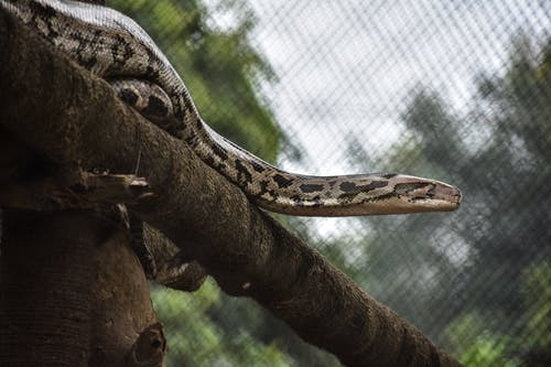 Brown and Black Snake on Brown Tree Branch