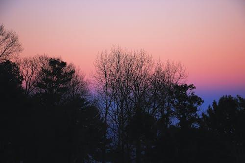 Free stock photo of murree, nature, purple