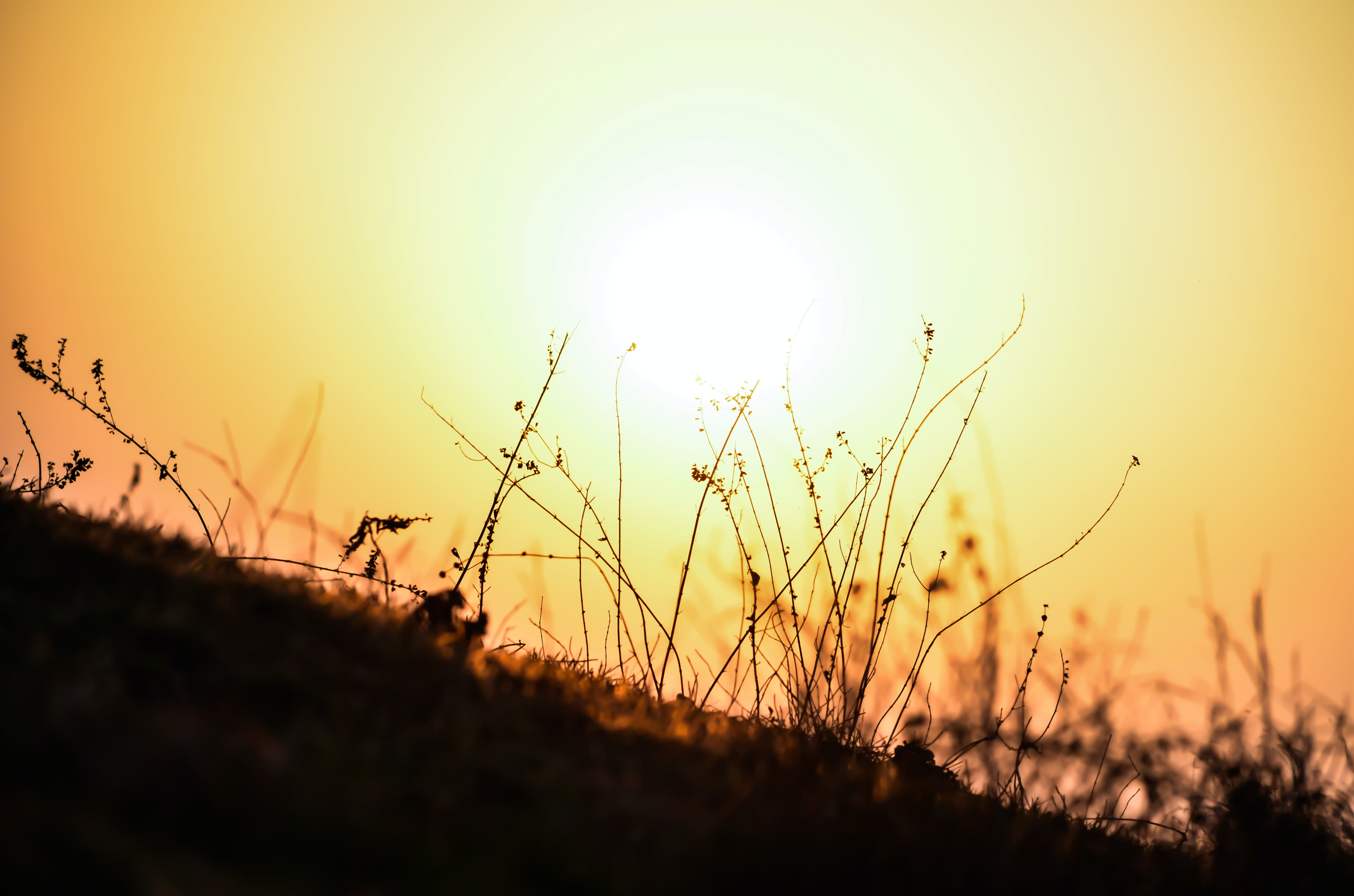 Free stock photo of ray of sunshine