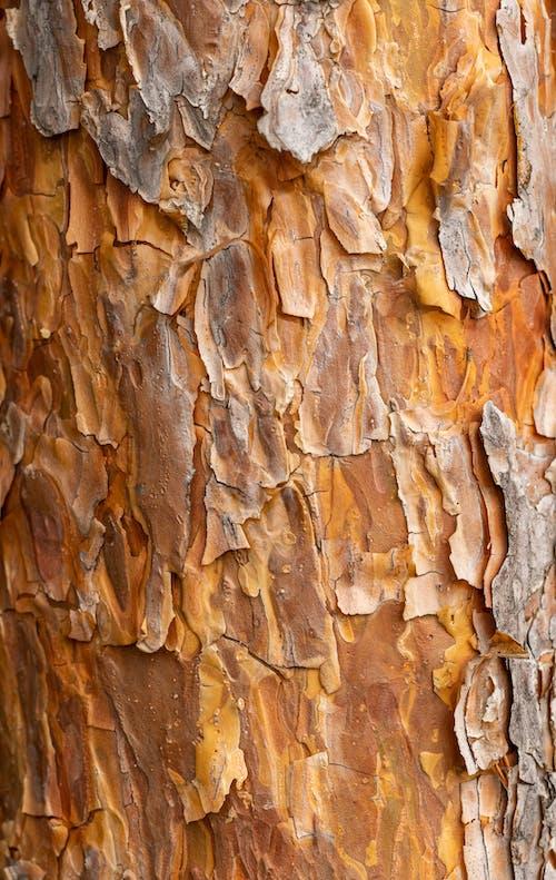 Бесплатное стоковое фото с абстрактный, апельсин, ботаника