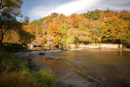 Autumn forest on coast of river on sunny day