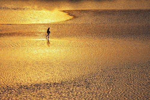 Foto d'estoc gratuïta de a l'aire lliure, aiguamolls, aventura, barres de fangs