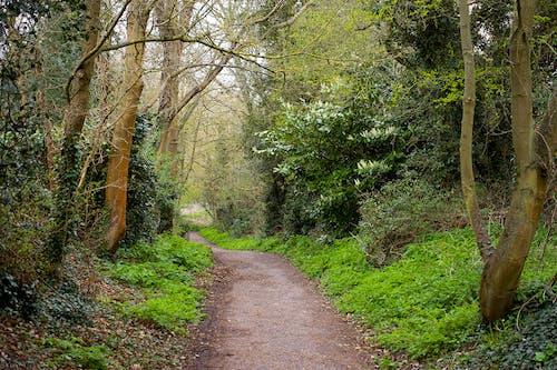 Brown Dirt Road Between Green Trees