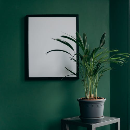 Green Plant on White Pot