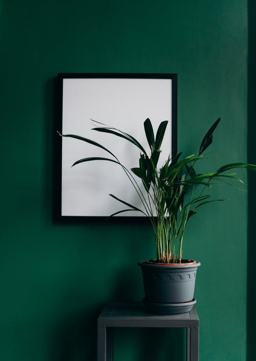 Green Plant on Blue Pot