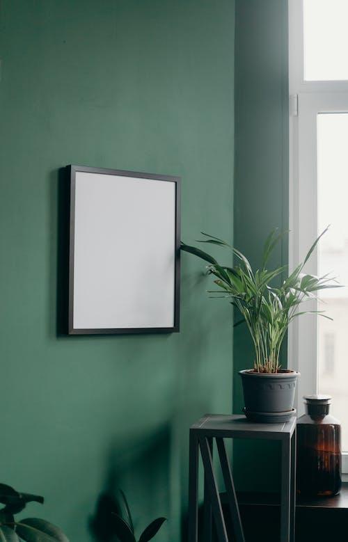 Kostnadsfri bild av affisch, bild ram, blomkruka, duk