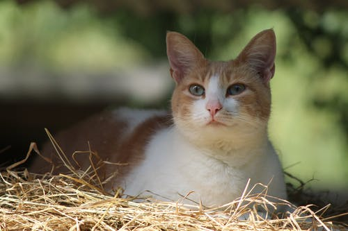 White and Brown Cat on Brown Nest