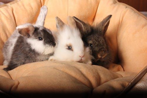 Free stock photo of animal, Великденски заек, зайче