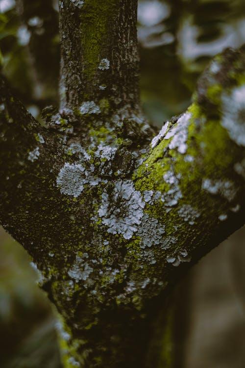 Fotos de stock gratuitas de al aire libre, árbol, color, corteza