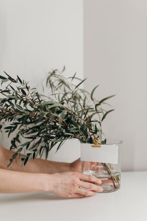 Ảnh lưu trữ miễn phí về bàn, bình hoa, bình thủy tinh, các loại thảo mộc