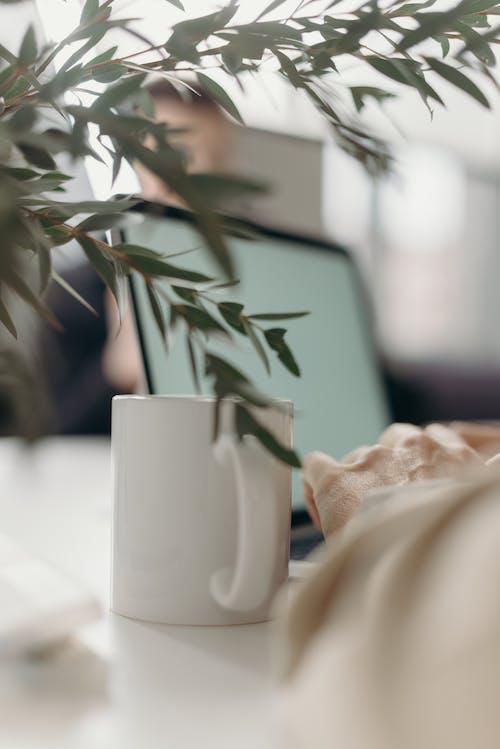 Безкоштовне стокове фото на тему «apple, бізнес, білий екран, в мережі»