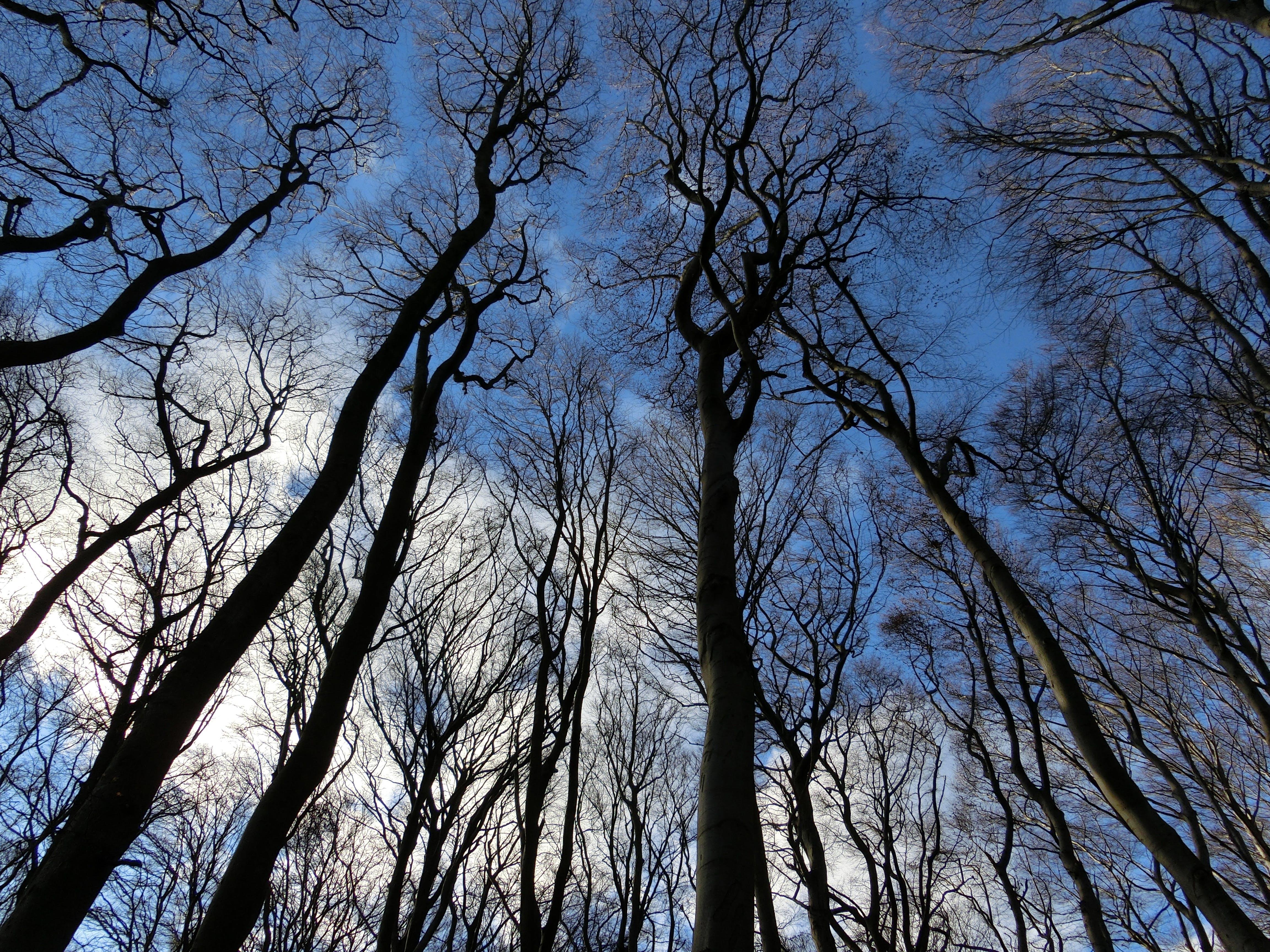 Trees Under Blue Sky