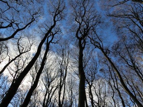 Ingyenes stockfotó ágak, ég, fák témában