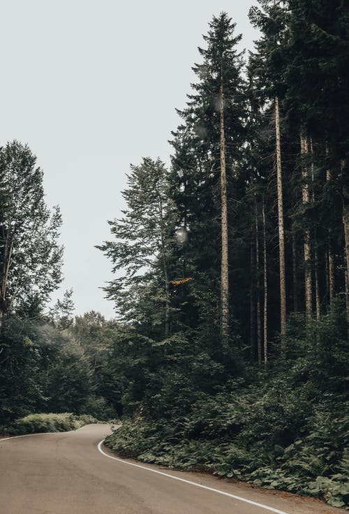 Foto d'estoc gratuïta de a l'aire lliure, arbre, arbres, arbres alts