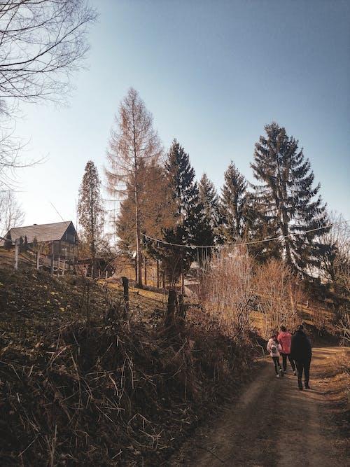 People Walking on Pathway Near Trees