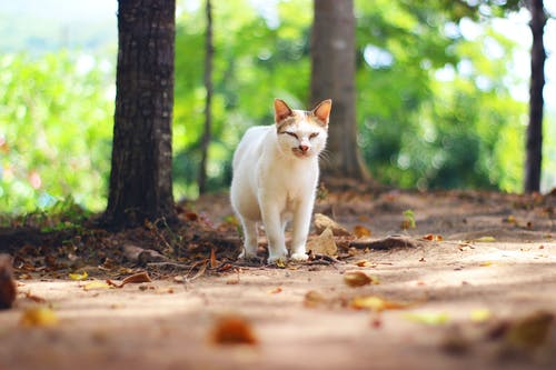 Photo of Cat on Dried Leaves