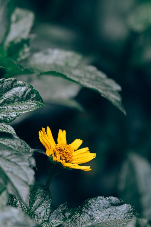 Yellow Flower in Green Leaves