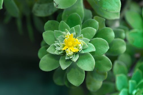 Yellow and Green Flower in Tilt Shift Lens
