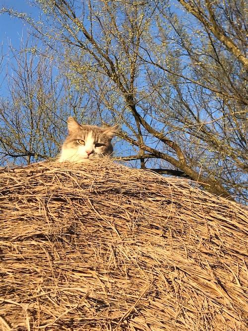 Free stock photo of cat, creepy, farm cat