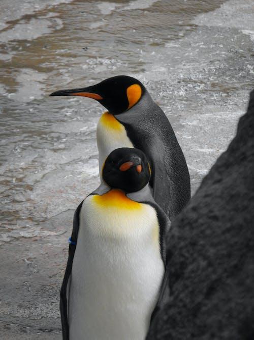 Penguins on Shore