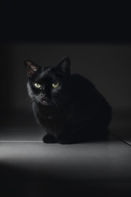 ネコ, ネコ科, ペット, 動物の無料の写真素材