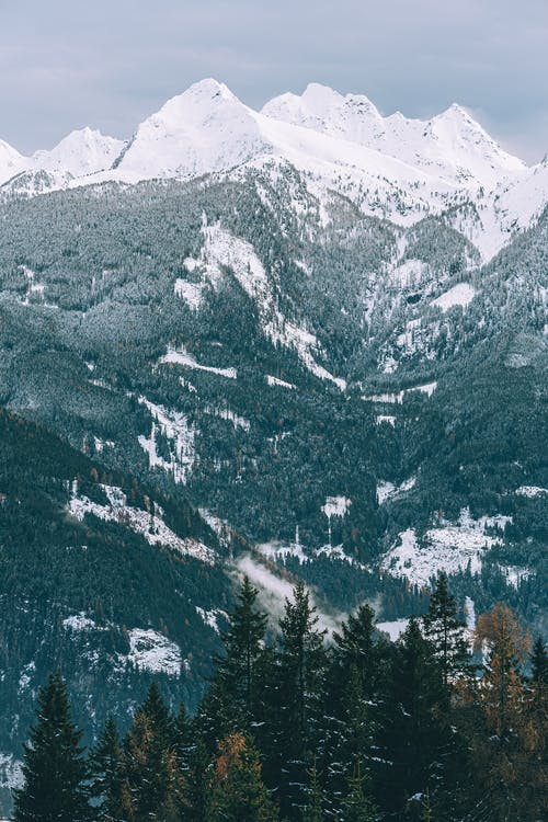 Photo Of Coniferous Trees During Daytime