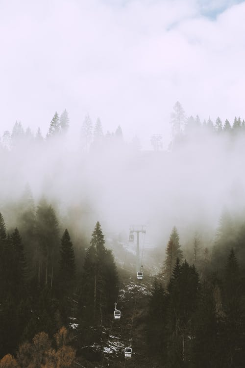 Photo Of Pin Trees Covered With Fog