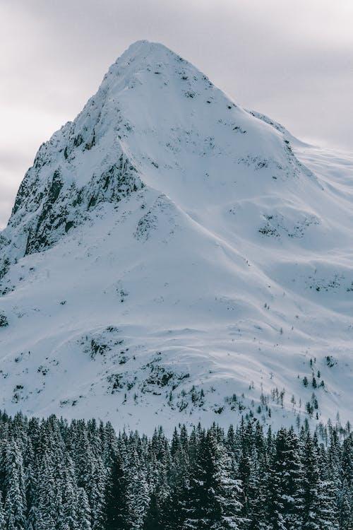 Foto d'estoc gratuïta de alps, arbres, arbres de coníferes