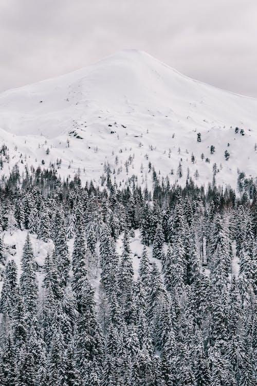 Základová fotografie zdarma na téma 4k tapeta, Alpy, borovice, fotografie přírody