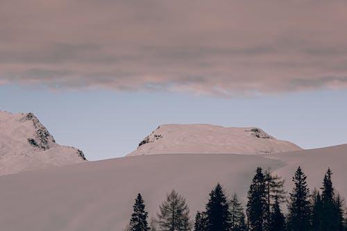 Ilmainen kuvapankkikuva tunnisteilla 4k taustakuva, Alpit, havupuinen