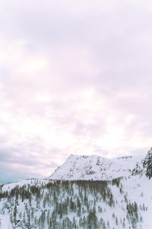 4k 桌面, ICEE, 下雪, 下雪的 的 免費圖庫相片