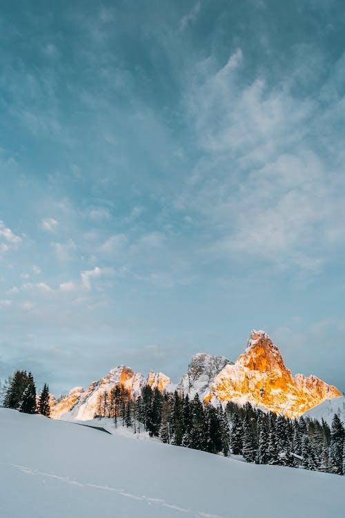 Fotos de stock gratuitas de Alpes, arboles, arboles coniferos