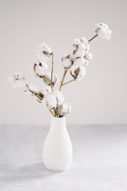 White Cotton in White Ceramic Vase