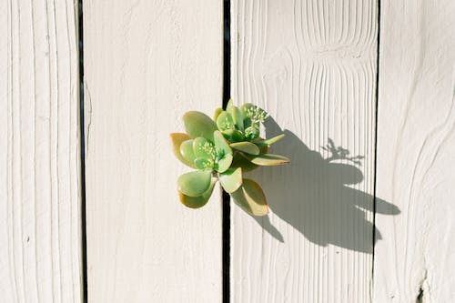 Green Plant on White Wooden Surface