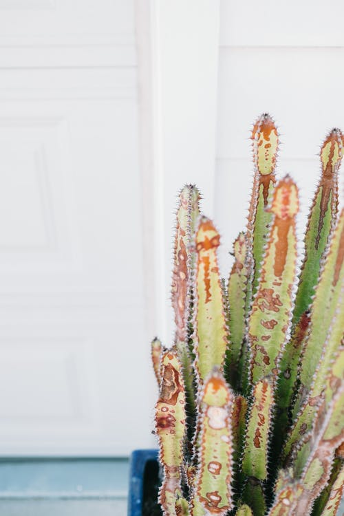 Free stock photo of cactus, White Color