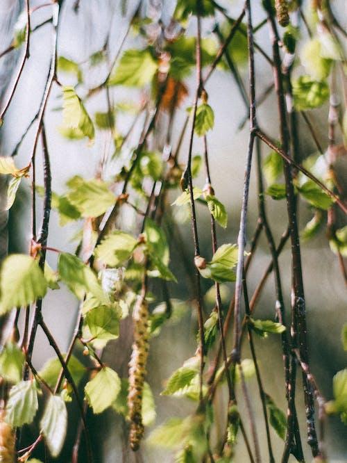 คลังภาพถ่ายฟรี ของ ก้าน, ก้านดอก, การถ่ายภาพธรรมชาติ