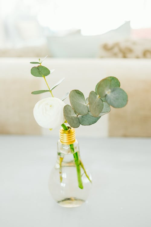 White Flower and Green Leaves in Glass Bottle