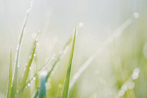 Selective Focus Photo Of Water Droplets On Green Grass