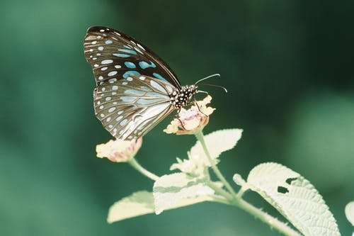 Photo Of Butterfly On Flower