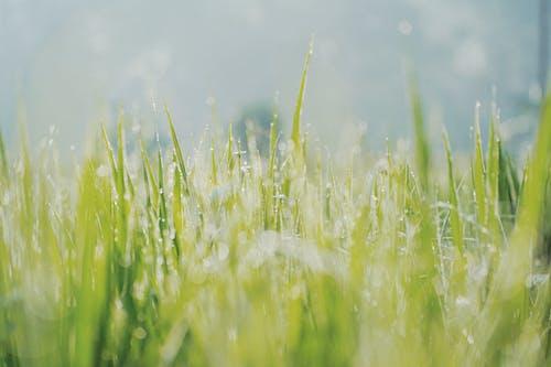 Základová fotografie zdarma na téma bokeh, čerstvý, dešťové kapky, fotografie přírody