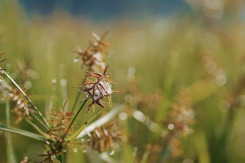 Darmowe zdjęcie z galerii z bokeh, głębia pola, kolor, lato