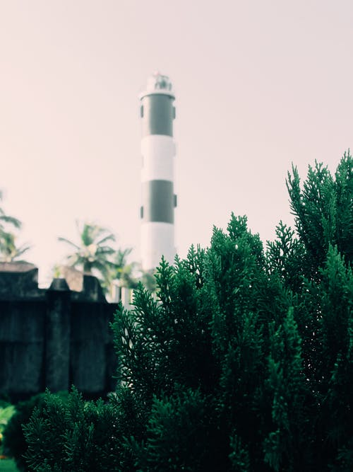 White and Black Lighthouse Near Green Trees