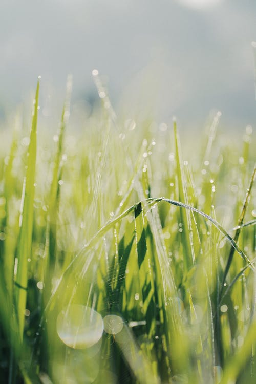 Selective Focus Of Grass