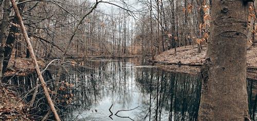 Brown Trees Beside Body of Water
